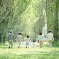 ポプラ並木を歩く3世代家族の後姿
