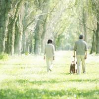犬の散歩をするシニア夫婦の後姿