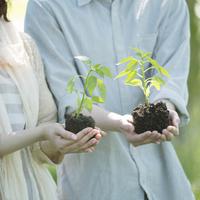 植物の苗を持つ手元