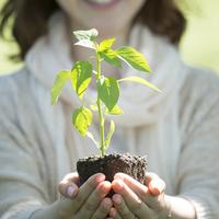 植物の苗を持つ女性の手元