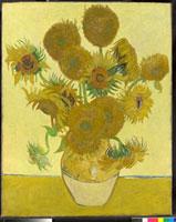 Sunflowers/ひまわり