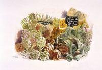 アーティーチョーク等の野菜 20037001513| 写真素材・ストックフォト・画像・イラスト素材|アマナイメージズ