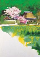 桜と古民家 20037002134| 写真素材・ストックフォト・画像・イラスト素材|アマナイメージズ