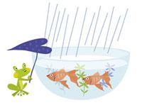 蛙と魚 20037003420| 写真素材・ストックフォト・画像・イラスト素材|アマナイメージズ