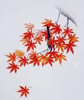紅葉と鳥 20037004341| 写真素材・ストックフォト・画像・イラスト素材|アマナイメージズ
