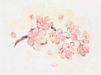 桜 20037004527| 写真素材・ストックフォト・画像・イラスト素材|アマナイメージズ
