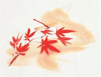 もみじ 20037004528| 写真素材・ストックフォト・画像・イラスト素材|アマナイメージズ