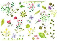 花と葉 20037004933| 写真素材・ストックフォト・画像・イラスト素材|アマナイメージズ