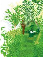 森の小道と白い鳥 20037005524| 写真素材・ストックフォト・画像・イラスト素材|アマナイメージズ