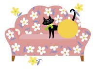 ソファと猫