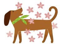 犬とサクラ