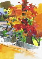 紅葉した武家屋敷 水彩 20037008297| 写真素材・ストックフォト・画像・イラスト素材|アマナイメージズ