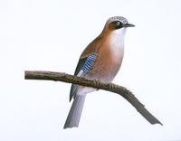 鳥 20037008879| 写真素材・ストックフォト・画像・イラスト素材|アマナイメージズ