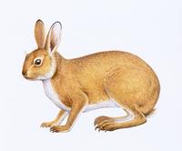 ウサギ 20037008880| 写真素材・ストックフォト・画像・イラスト素材|アマナイメージズ