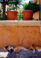 Cats in the yard of Ag. Triada monastery 20038005114| 写真素材・ストックフォト・画像・イラスト素材|アマナイメージズ