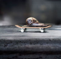 snail on skateboard