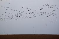 Migratory birds  20038009932| 写真素材・ストックフォト・画像・イラスト素材|アマナイメージズ