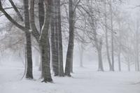 Snowfall 20038010432| 写真素材・ストックフォト・画像・イラスト素材|アマナイメージズ