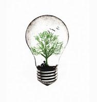 Tree growing in light bulb