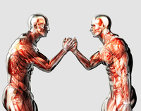 Male anatomical models arm wrestling on white background