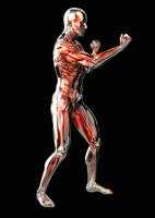 Male anatomical model in fighting stance on black background