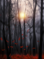 Sun shining behind trees with falling red autumn leaves in a
