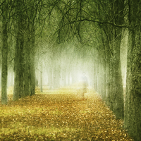 Transparent figure of woman walking through autumn trees and