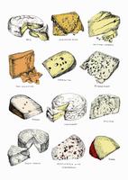 Different types of cheese 20039007946  写真素材・ストックフォト・画像・イラスト素材 アマナイメージズ
