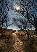 Moonlight over path