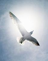 A bird in the air