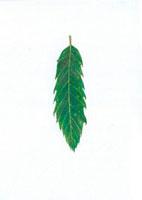 くぬぎの葉