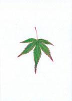 もみじの葉