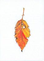 桜の落葉 20041000198| 写真素材・ストックフォト・画像・イラスト素材|アマナイメージズ