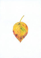 桜の落葉 20041000205| 写真素材・ストックフォト・画像・イラスト素材|アマナイメージズ