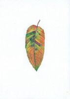 クヌギの落葉