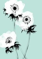 3輪の白いアネモネ 20041000458| 写真素材・ストックフォト・画像・イラスト素材|アマナイメージズ
