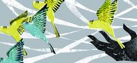 手から羽ばたく青と緑のインコ 20041000462| 写真素材・ストックフォト・画像・イラスト素材|アマナイメージズ