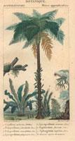 Palm tree, ferns, jungle