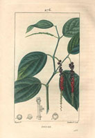 Black pepper, leaves, seeds