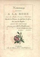 Pink moss rose, calligraphic title