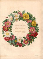 Wreath of wild roses around Greek poem