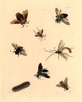 Xylocopa,Tesseratoma,Leptoscelis species