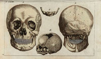 Skull,front,rear,bone 20042001452| 写真素材・ストックフォト・画像・イラスト素材|アマナイメージズ