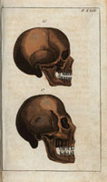 Skulls,side view: European,Asian