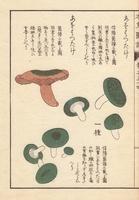 Lactarius akahatsu Tanaka mushroom