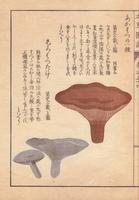 Akahatsu mushrooms