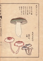 Shimejitake mushrooms
