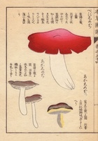 Russeula emetica and akashimeji mushrooms
