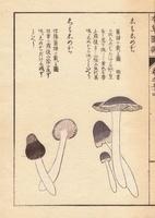 Shimoshimeji mushrooms
