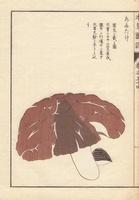 Anutake mushroom